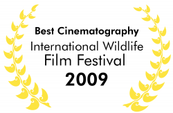 Best Cinematography International Wildlife Film Festival