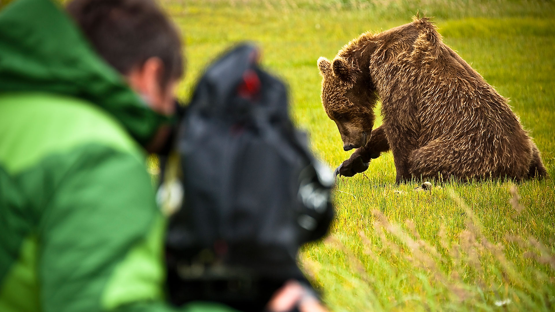 bears feature footage by john shier